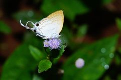 Butterfly. Animal nature forest Royalty Free Stock Photo
