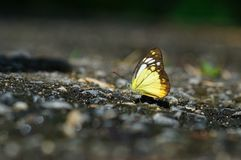 Butterfly. Animal nature forest season cute Royalty Free Stock Photos