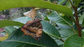 Butterfly. Animal newborn nature life Stock Photography