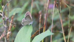 Butterfly, animals, macro, bokeh, insect, nature, stock footage