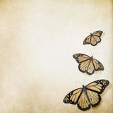 Butterfly antique background Royalty Free Stock Images