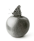 Butterfly on apple Royalty Free Stock Image