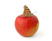 Butterfly on apple Royalty Free Stock Photography