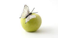 Butterfly on the apple. Butterfly on the green apple Stock Photos