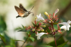 Butterfly approaching a flower Stock Image