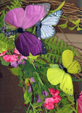Butterfly Arrangement. Colorful Butterfly Detail and Flower Arrangement Stock Images