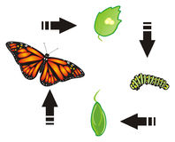 Butterfly with arrows stock illustration