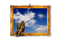 Butterfly and art Royalty Free Stock Photos
