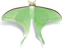 Butterfly Artemis on white Stock Photos