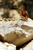 Butterfly as a rock. Royalty Free Stock Photo