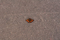Butterfly on asphalt Royalty Free Stock Photography