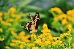 Butterfly in Assiniboine Zoo, Winnipeg, Manitoba Stock Image