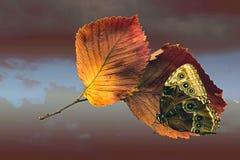Butterfly on autumn orange sheet. Tree on background dark sky royalty free stock image