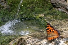 Butterfly with babbling water royalty free stock photo