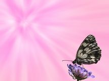 Butterfly background. Colorful background with a butterfly on a flower Stock Image