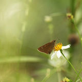Butterfly background. Isolate of butterfly and flower background Royalty Free Stock Image
