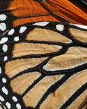 Butterfly Background. Texture and detail of a butterfly wing for background Stock Photography