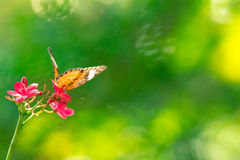 The butterfly background in park of Thailand Royalty Free Stock Image