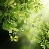 Butterfly on the background of spring leaves Royalty Free Stock Photos
