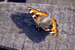 Butterfly. On background of the wood royalty free stock photo