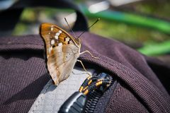 Butterfly on backpack. Stock Photography