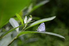 Butterfly. While basking in a Himalayan garden,Sikkim,India Royalty Free Stock Photo