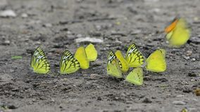 Butterfly basking stock footage