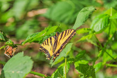Butterfly Basking In Sunlight Stock Photo