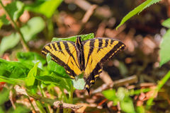 Butterfly Basking In Sunlight Royalty Free Stock Photos