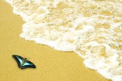 Butterfly on beach Royalty Free Stock Images