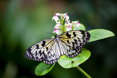 Butterfly on the beautiful background Royalty Free Stock Photos