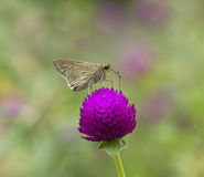Butterfly. Beautiful beauty flower green nature violet Royalty Free Stock Photo