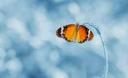 Butterfly is a beautiful and blur background. Butterfly is a beautiful and blur background in the picture is low dept of field Royalty Free Stock Photos