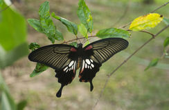 Butterfly. Beautiful butterfly on the branch Stock Images