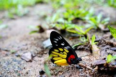Butterfly,a beautiful and colorful insects Stock Photos