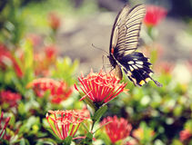 A butterfly on a beautiful flower. The colorful butterfly stays on a beautiful flower in a park, the blurry background gives this picture great feeling, like a royalty free stock photos