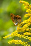 Butterfly. Beautiful butterfly on a flower Stock Images