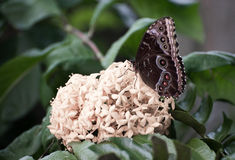 Butterfly. Beautiful butterfly in a garden stock images