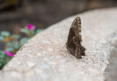 Butterfly. Beautiful butterfly in a garden stock photography