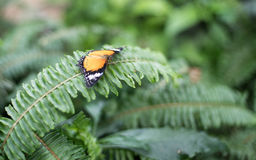 Butterfly. Beautiful butterfly in a garden royalty free stock photography