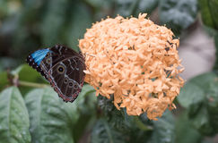Butterfly. Beautiful butterfly in a garden royalty free stock image