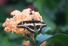 Butterfly. Beautiful butterfly in a garden royalty free stock images