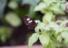 Butterfly. Beautiful butterfly in a garden stock photos
