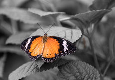 Butterfly. Beautiful butterfly in a garden royalty free stock photo