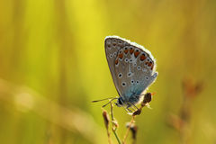 Butterfly. Beautiful butterfly in golden light Stock Photo