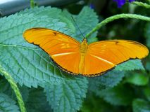 Butterfly. Beautiful Orange butterfly on a plant Royalty Free Stock Photos