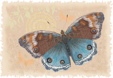 Butterfly. Beautiful butterfly on a retro background. Vector illustration Stock Photos