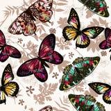 Butterfly beautiful Stock Photo