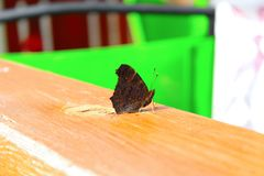 Butterfly. Beautiful butterfly on the shelf Royalty Free Stock Photos
