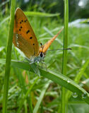 Butterfly. Beautiful butterfly sitting on grass Royalty Free Stock Photo